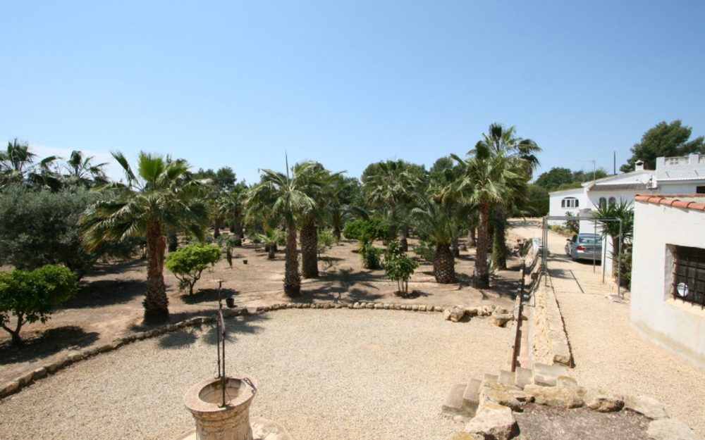 The palm trees of Elche as a World Heritage Site on the Costa Blanca